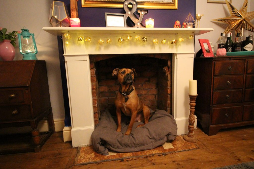 Settling in to his new fireplace dog bed