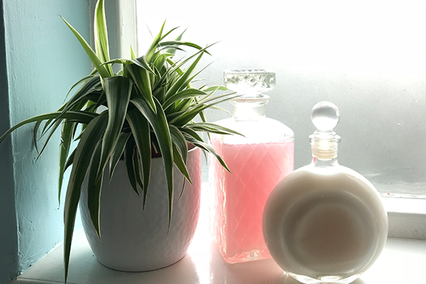 Spider plant and bath bubbles