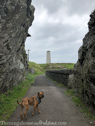 Dog exploring lighthouse